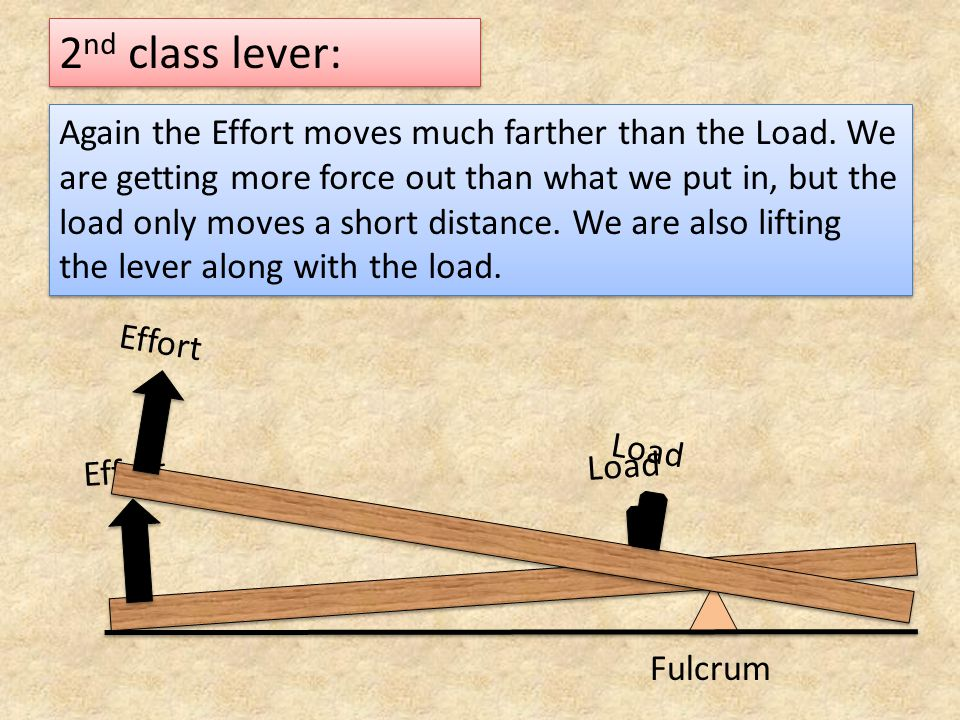 2nd class lever: