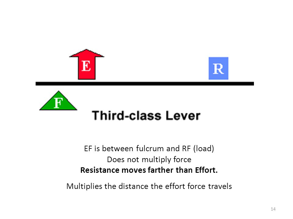 EF is between fulcrum and RF (load) Does not multiply force Resistance moves farther than Effort.