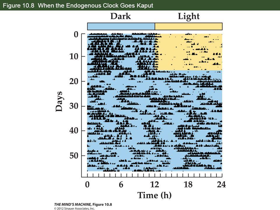 Figure 10.8 When the Endogenous Clock Goes Kaput