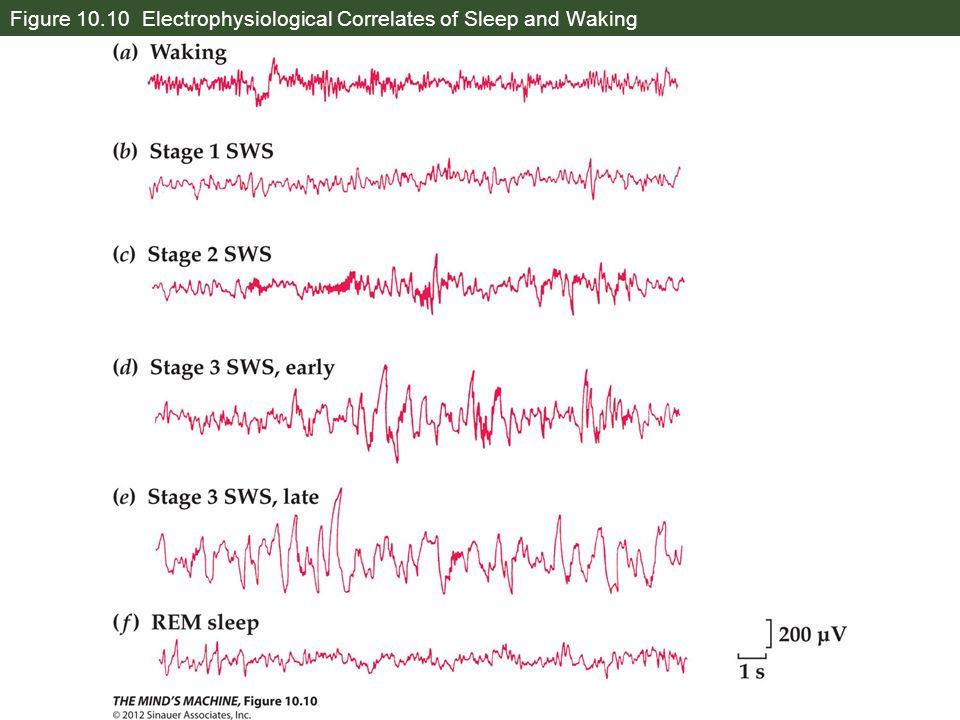 Figure 10.10 Electrophysiological Correlates of Sleep and Waking