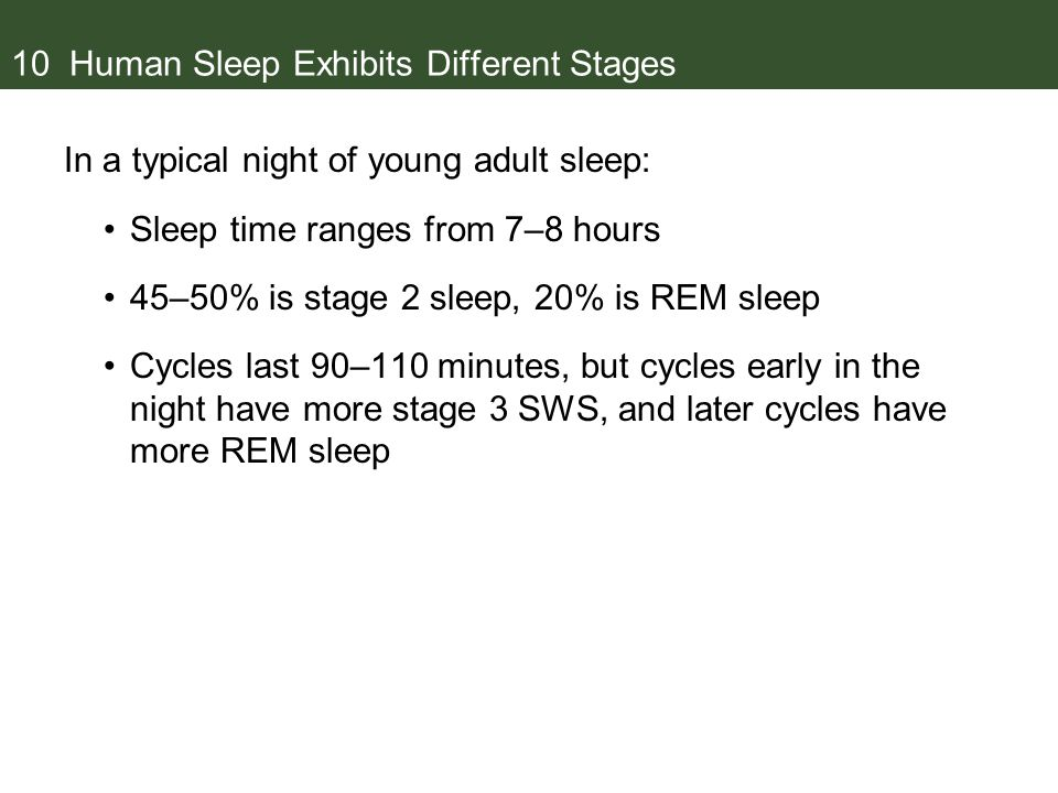 10 Human Sleep Exhibits Different Stages