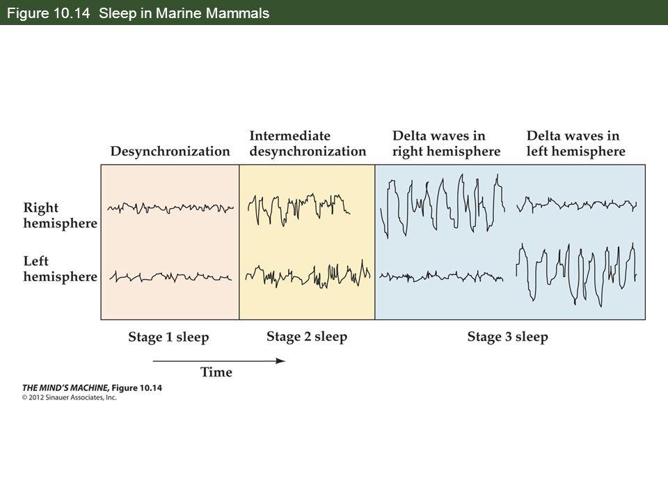 Figure 10.14 Sleep in Marine Mammals
