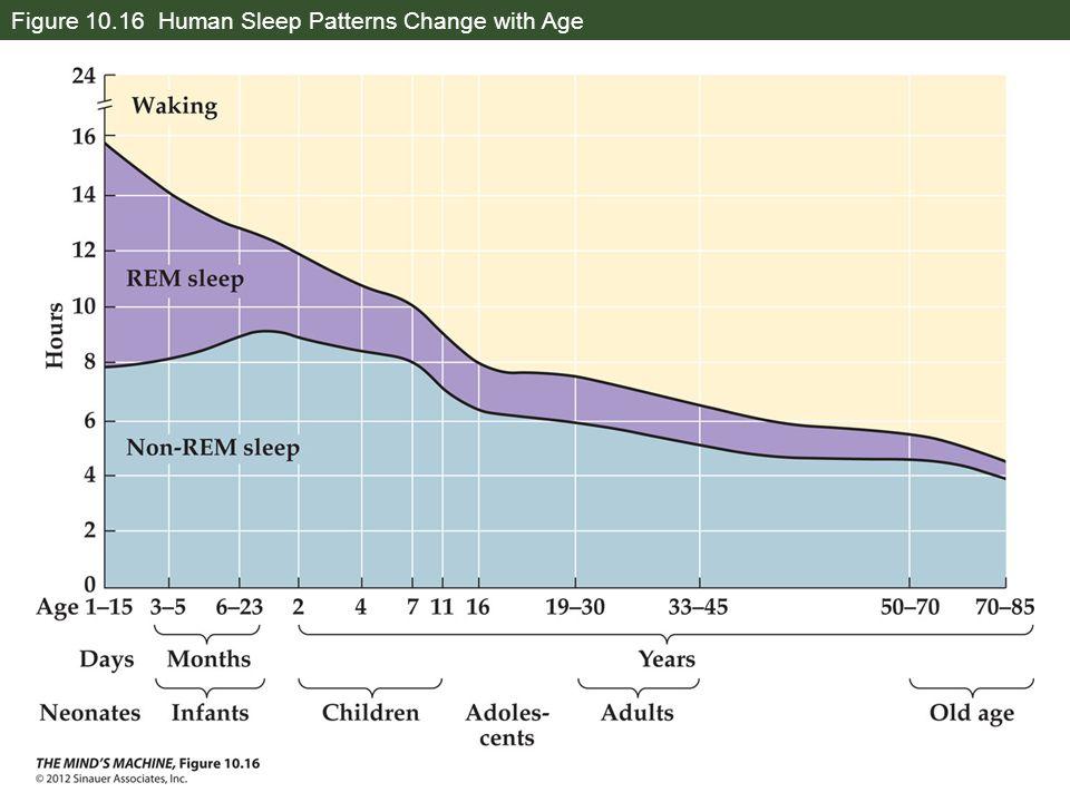 Figure 10.16 Human Sleep Patterns Change with Age