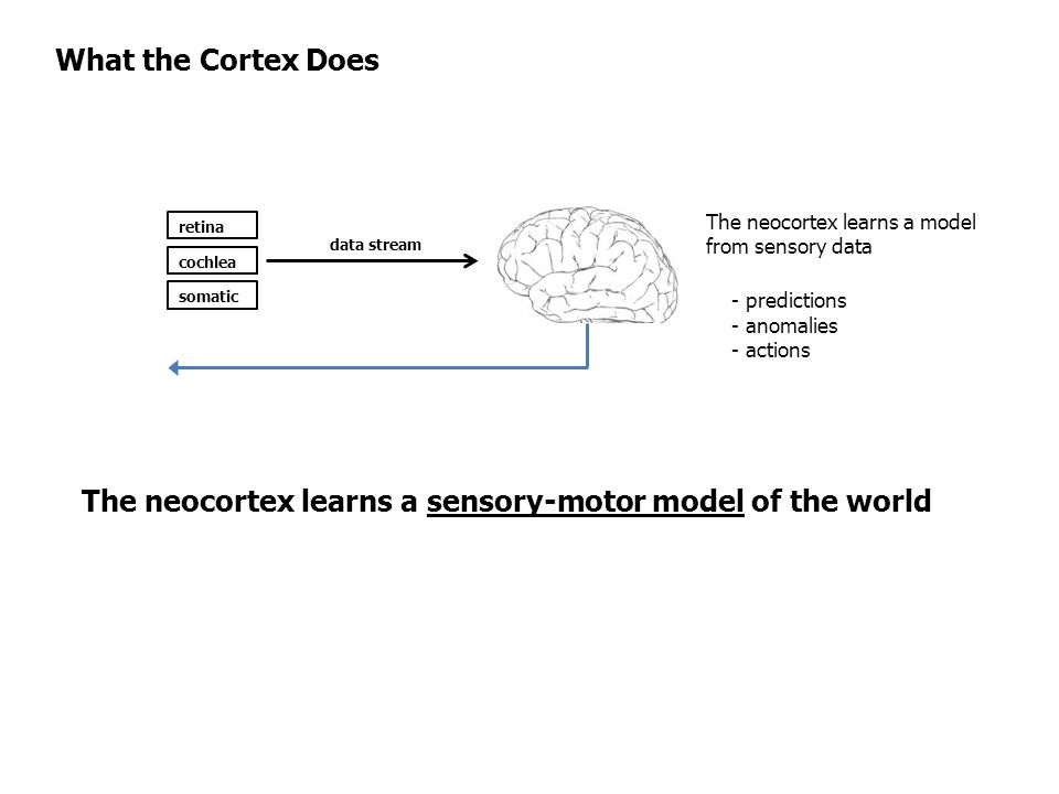 The neocortex learns a sensory-motor model of the world