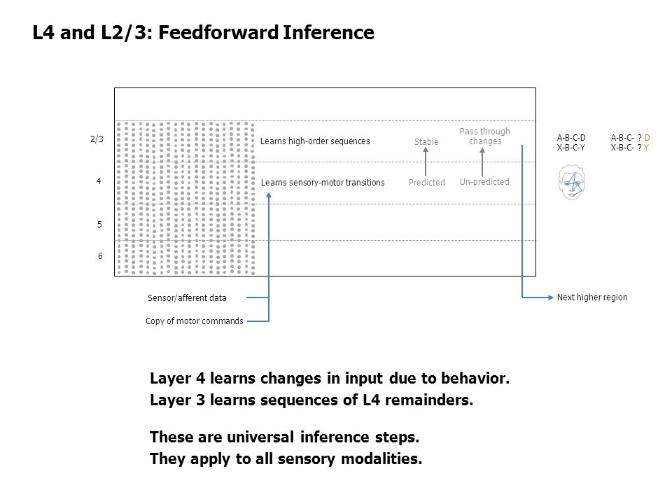 L4 and L2/3: Feedforward Inference