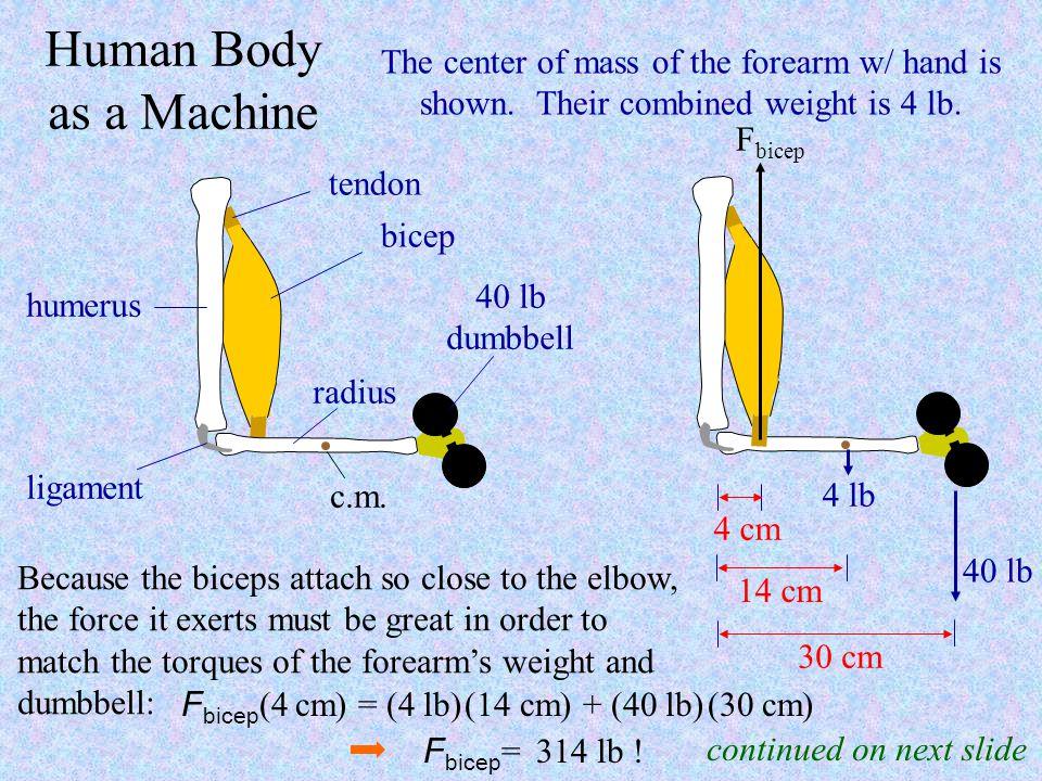 Fbicep(4 cm) = (4 lb) (14 cm) + (40 lb) (30 cm)