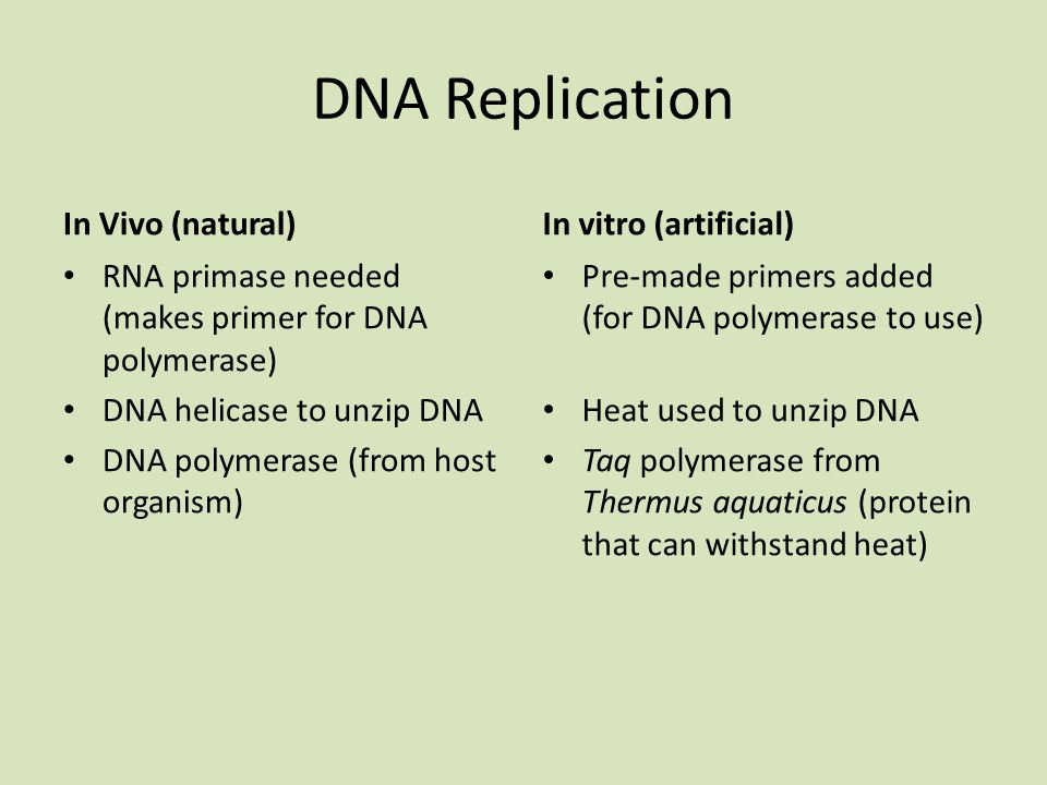 DNA Replication In Vivo (natural) In vitro (artificial)