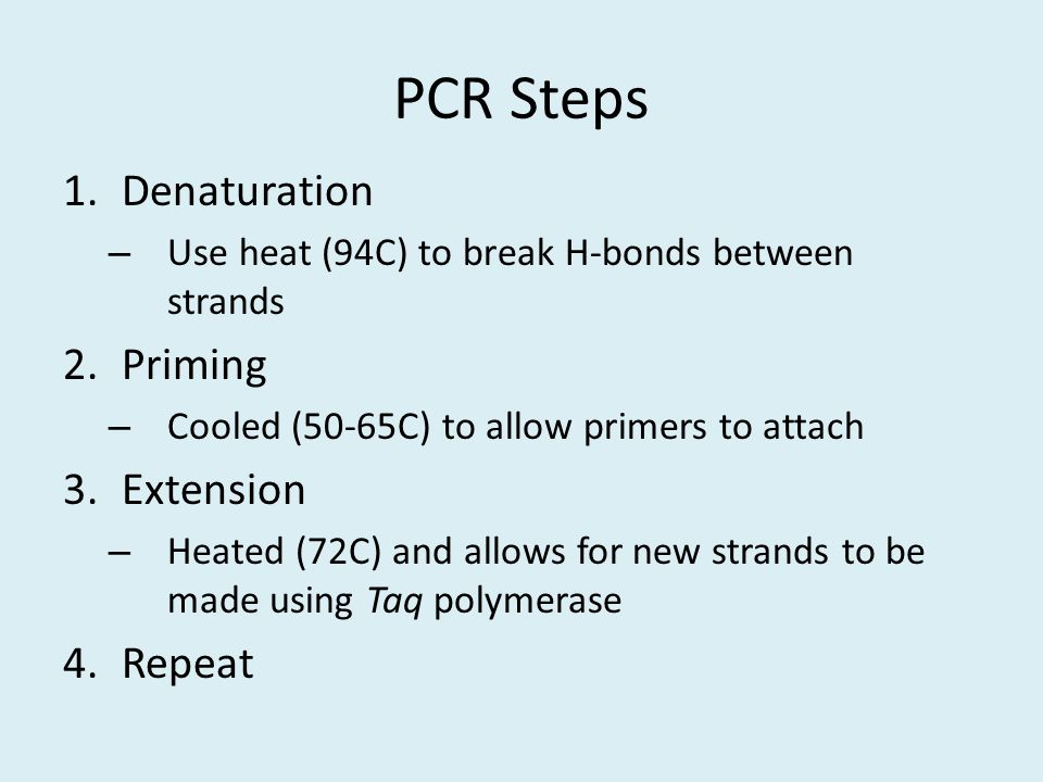 PCR Steps Denaturation Priming Extension Repeat