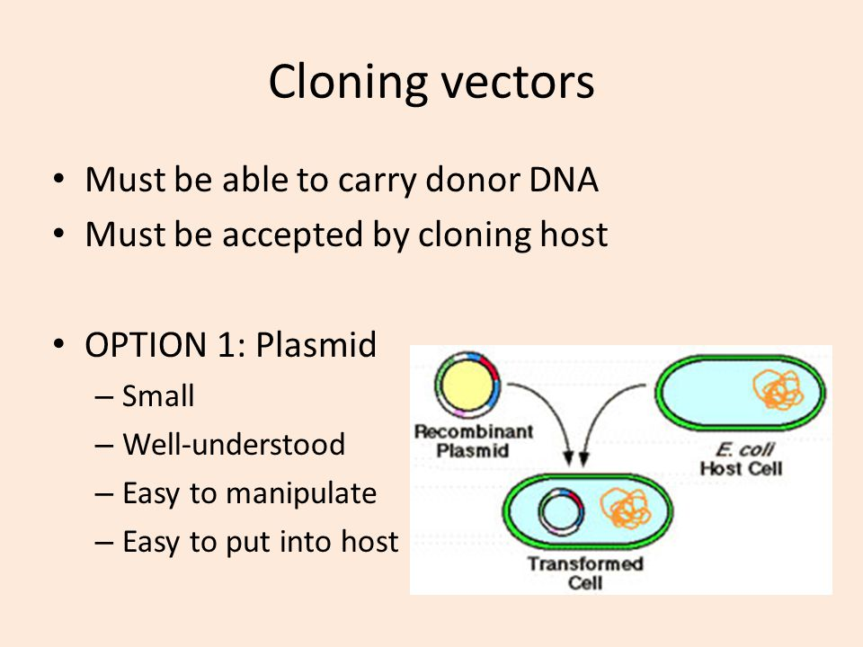 Cloning vectors Must be able to carry donor DNA