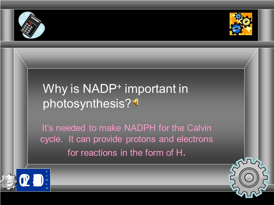Why is NADP+ important in photosynthesis