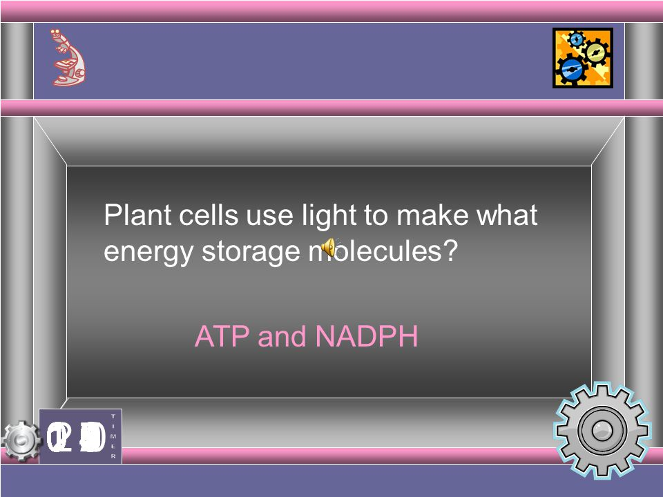 Plant cells use light to make what energy storage molecules