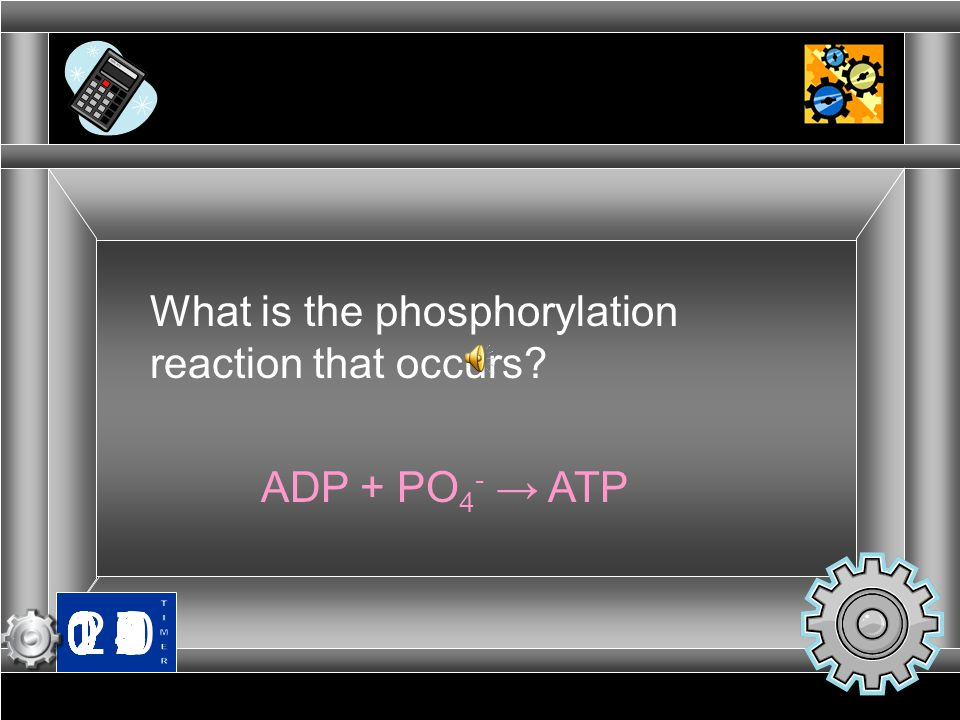 What is the phosphorylation reaction that occurs