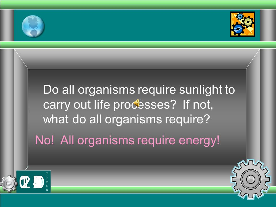 No! All organisms require energy!