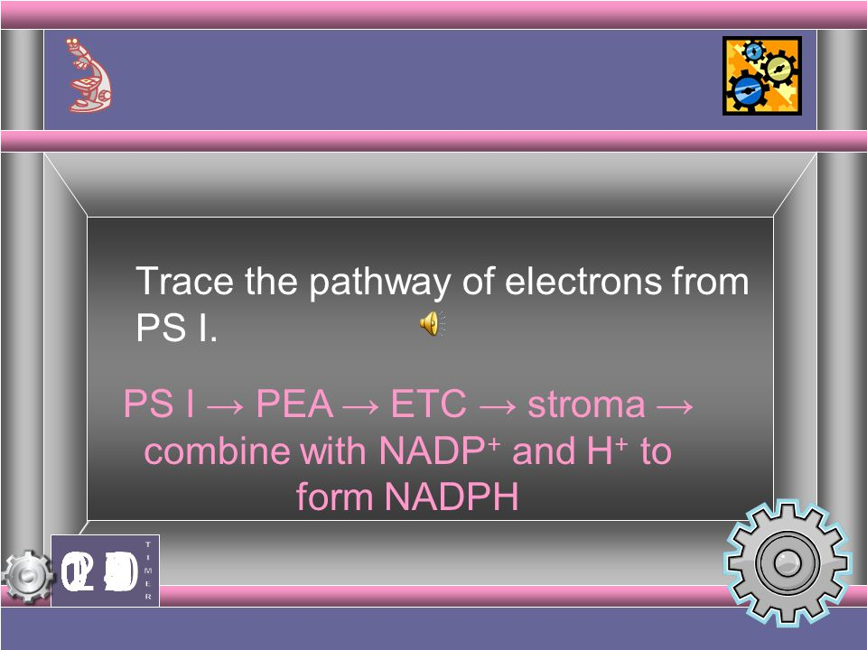PS I → PEA → ETC → stroma → combine with NADP+ and H+ to form NADPH