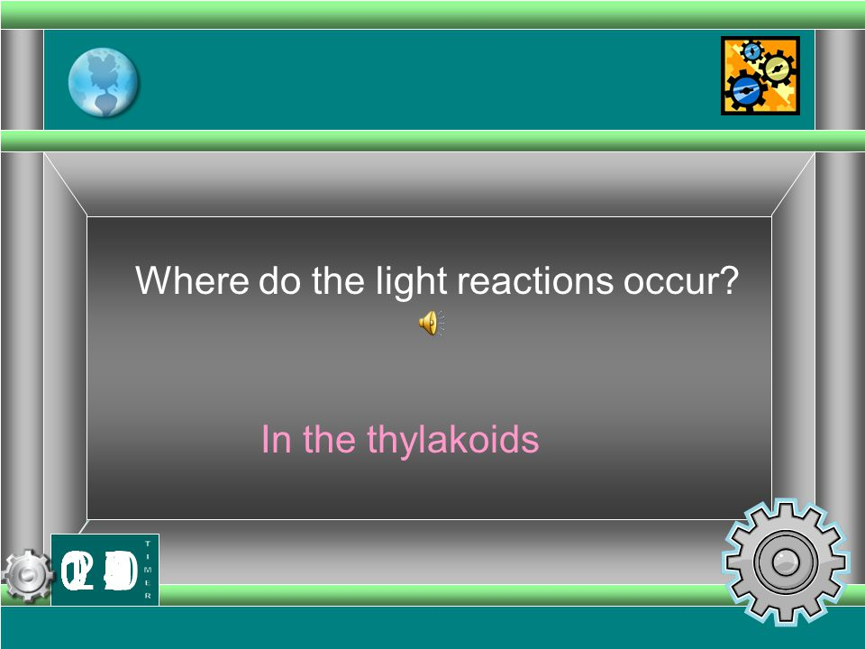 Where do the light reactions occur