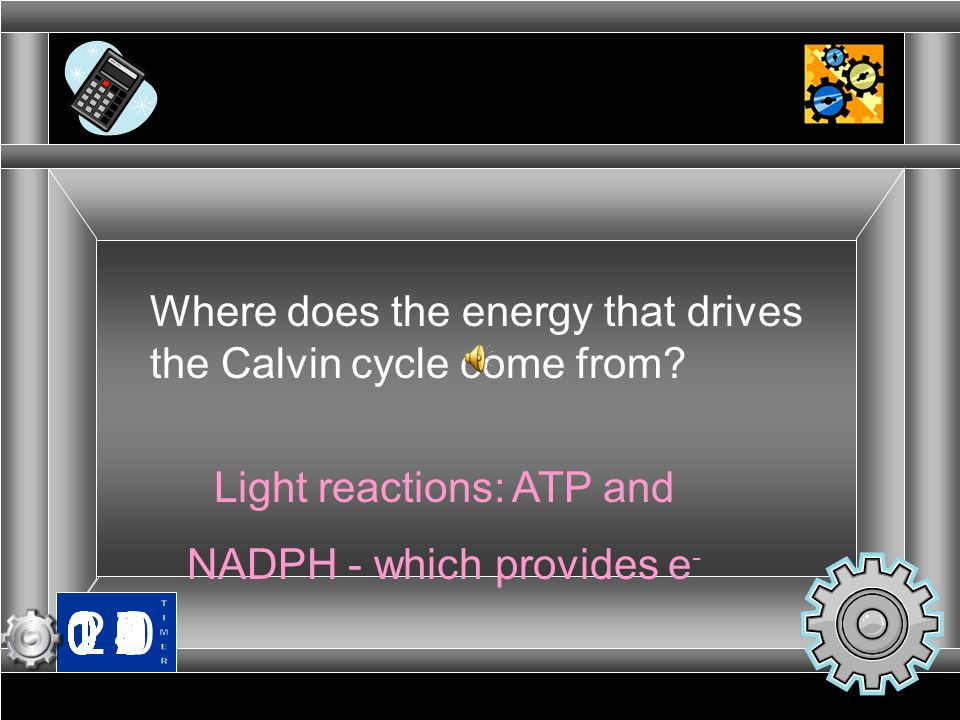 Where does the energy that drives the Calvin cycle come from