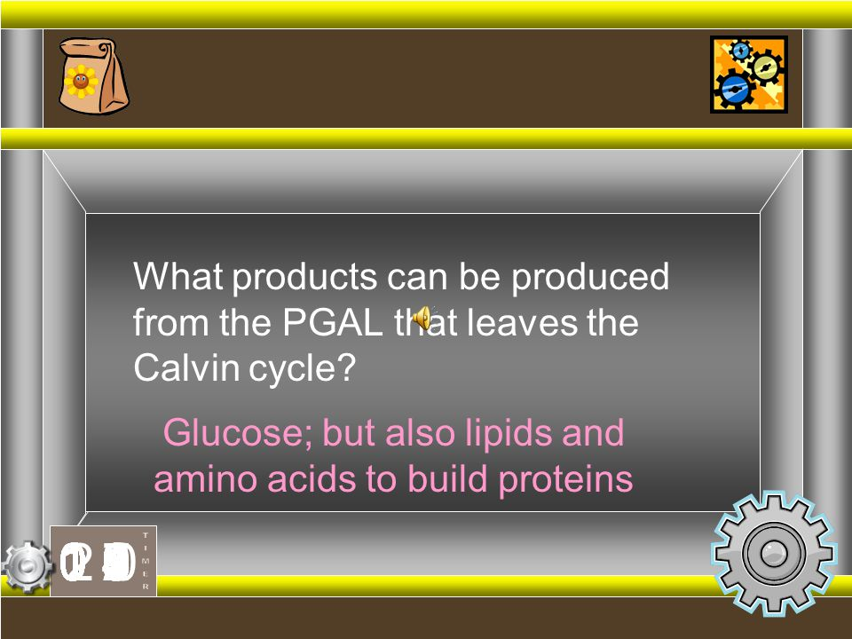 Glucose; but also lipids and amino acids to build proteins