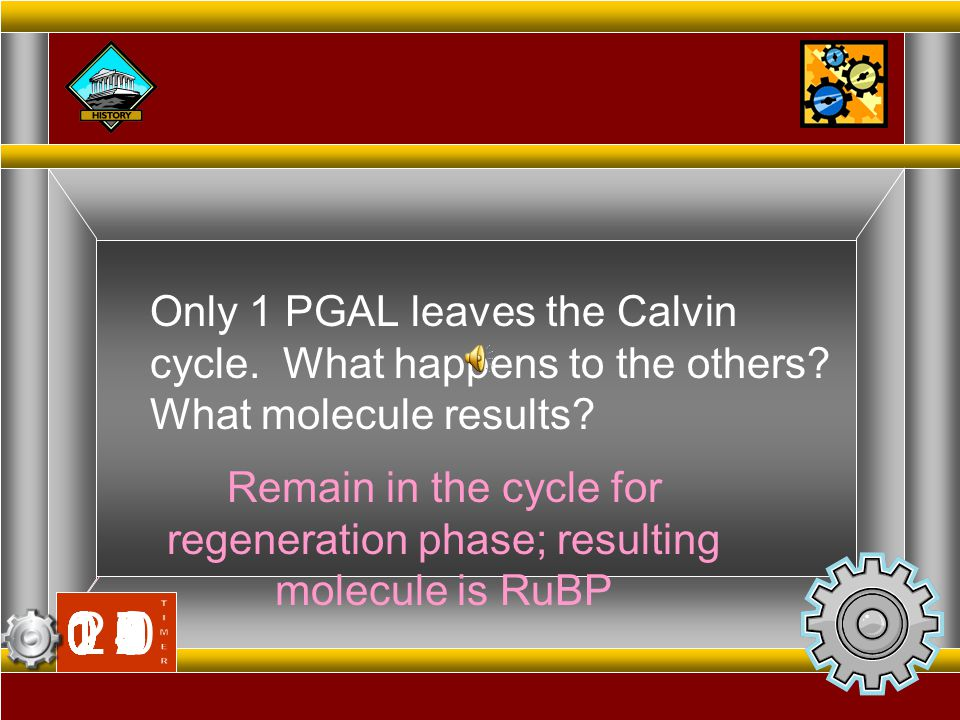 Remain in the cycle for regeneration phase; resulting molecule is RuBP