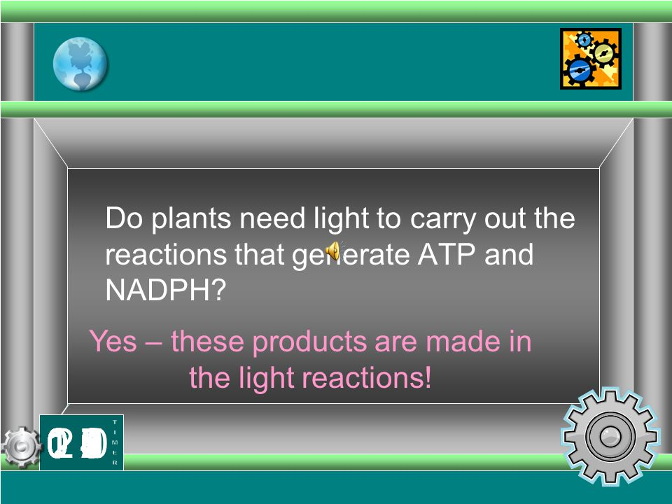Yes – these products are made in the light reactions!