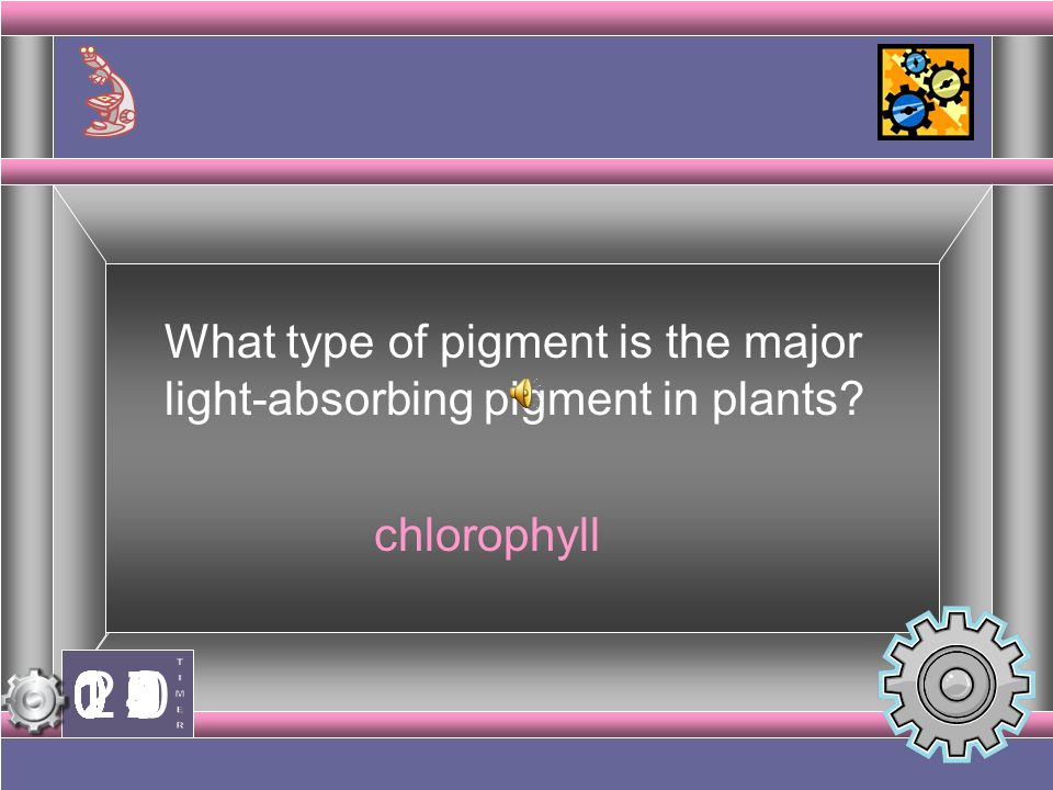 What type of pigment is the major light-absorbing pigment in plants