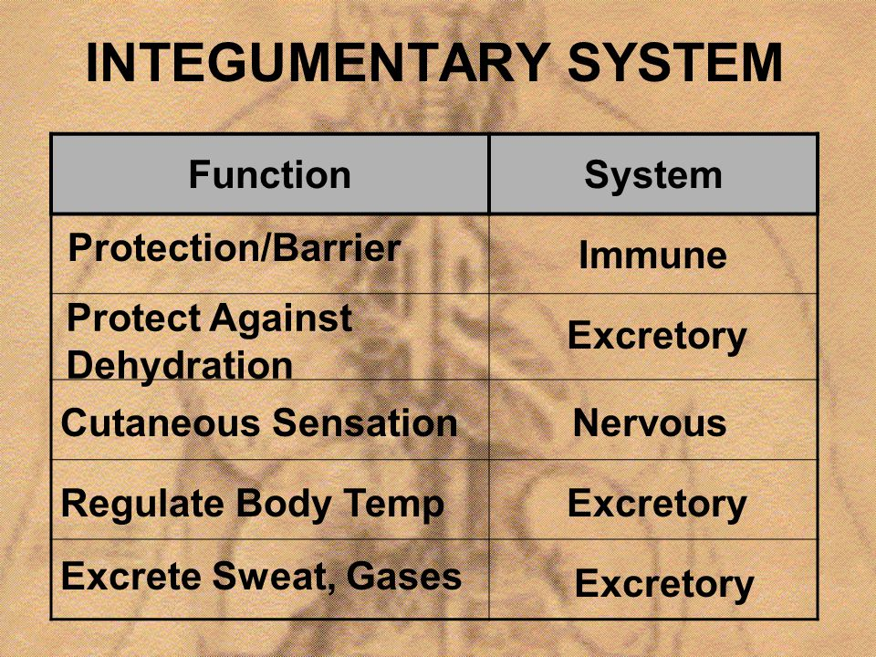 INTEGUMENTARY SYSTEM Function System Protection/Barrier Immune