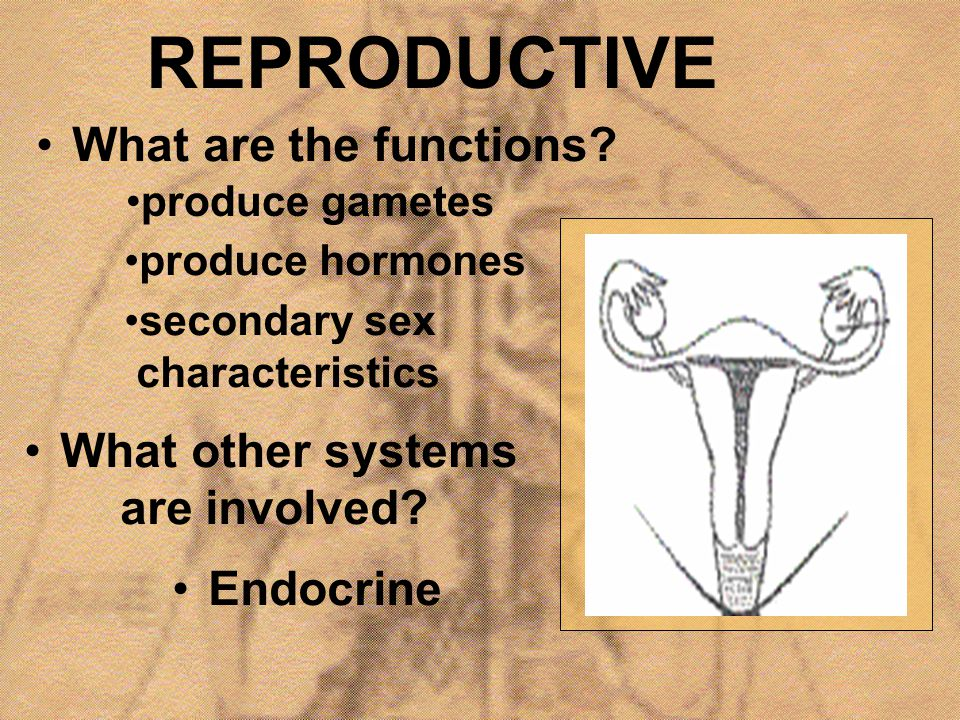 REPRODUCTIVE What are the functions What other systems are involved