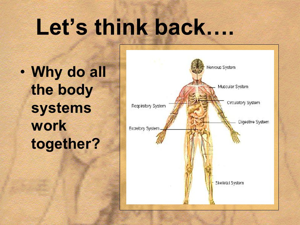Let's think back…. Why do all the body systems work together