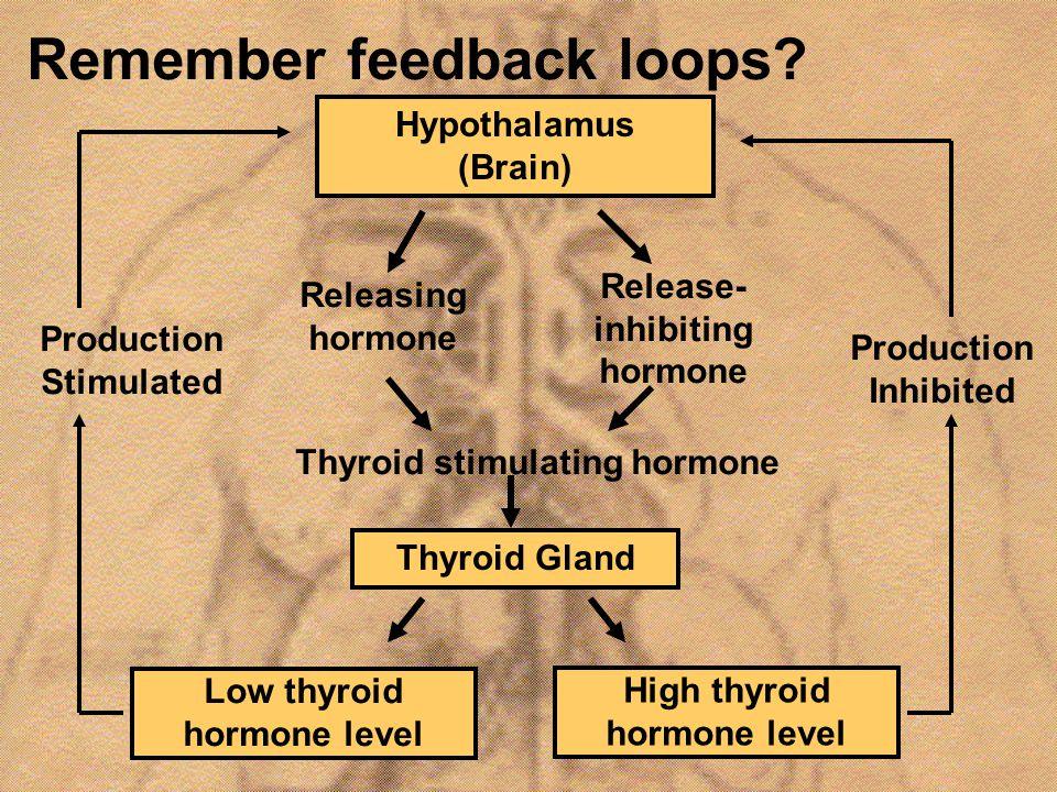 Remember feedback loops