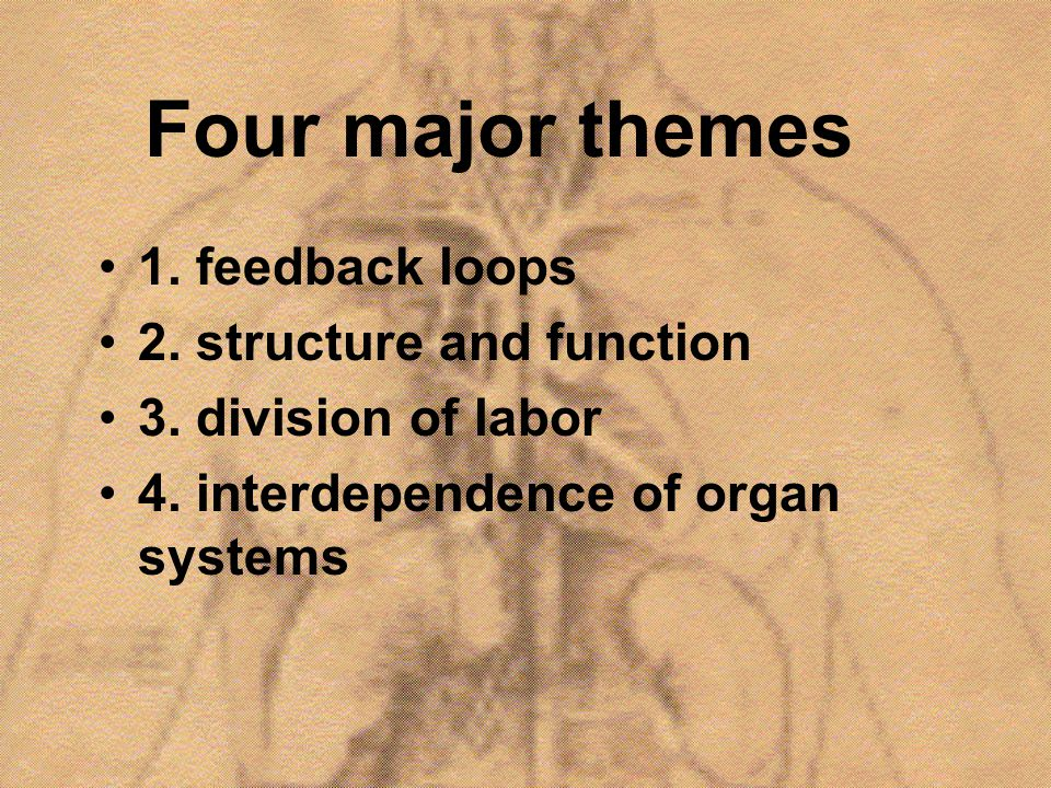 Four major themes 1. feedback loops 2. structure and function