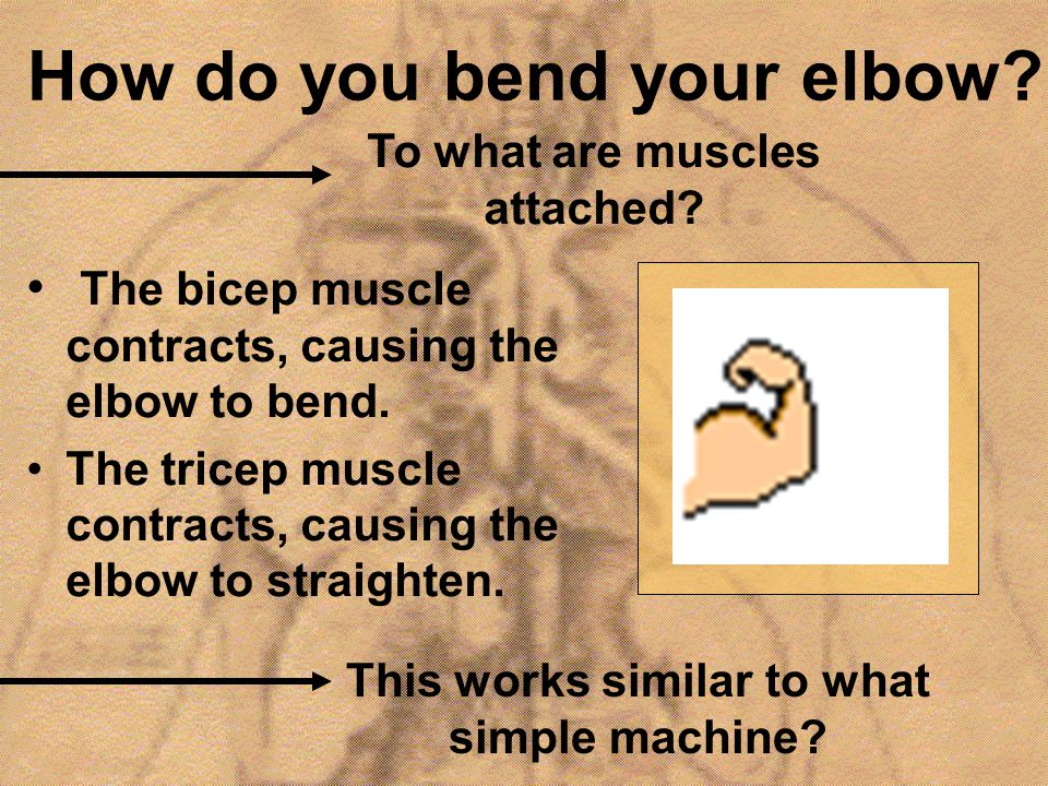 How do you bend your elbow