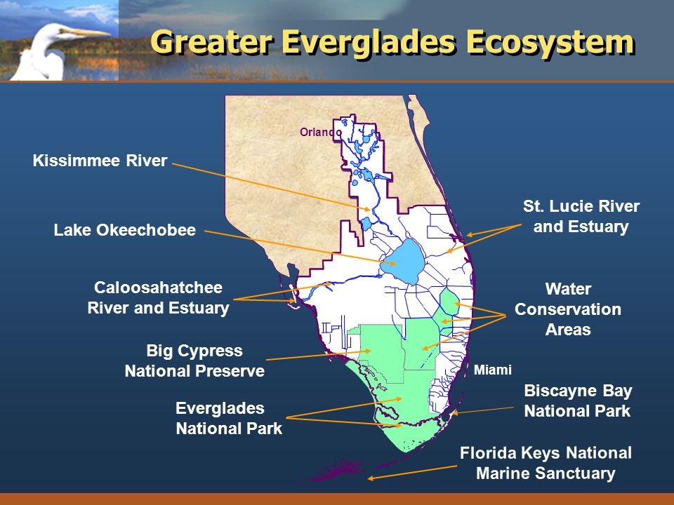 Greater Everglades Ecosystem