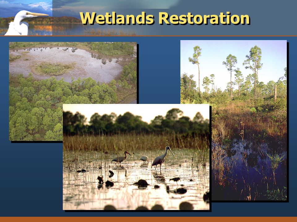 Wetlands Restoration