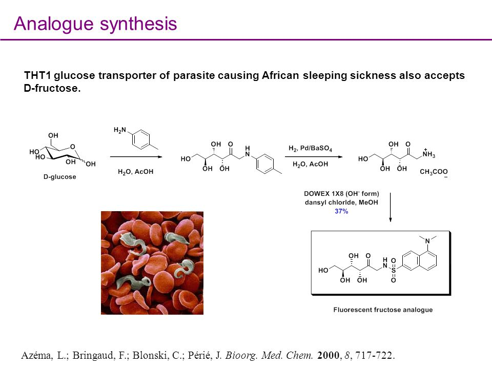 Analogue synthesis THT1 glucose transporter of parasite causing African sleeping sickness also accepts D-fructose.