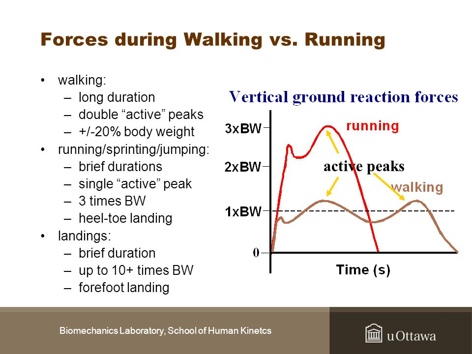 Forces during Walking vs. Running
