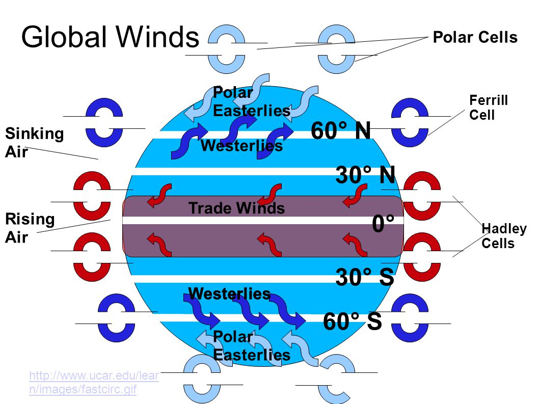 Global Winds 60° N 30° N 0° 30° S 60° S Polar Cells Polar Easterlies