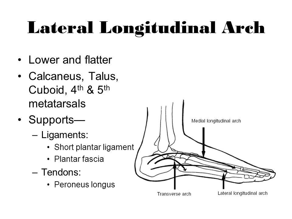 Lateral Longitudinal Arch