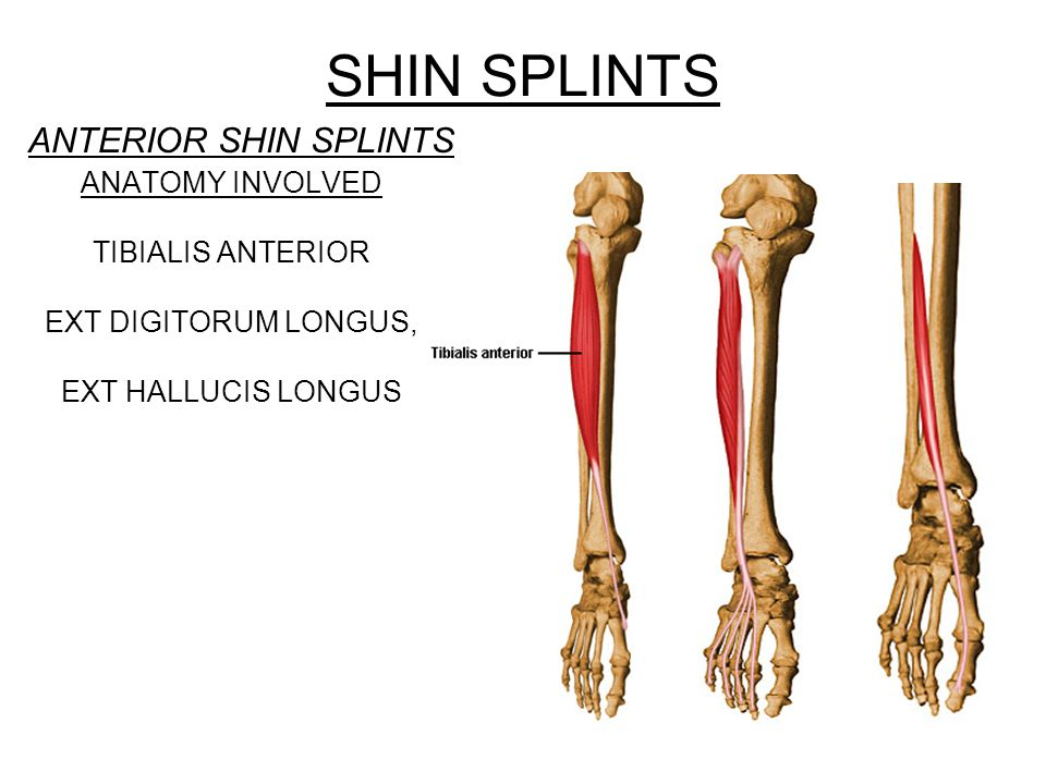 SHIN SPLINTS ANTERIOR SHIN SPLINTS ANATOMY INVOLVED TIBIALIS ANTERIOR