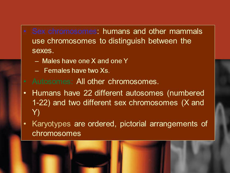 Autosomes: All other chromosomes.