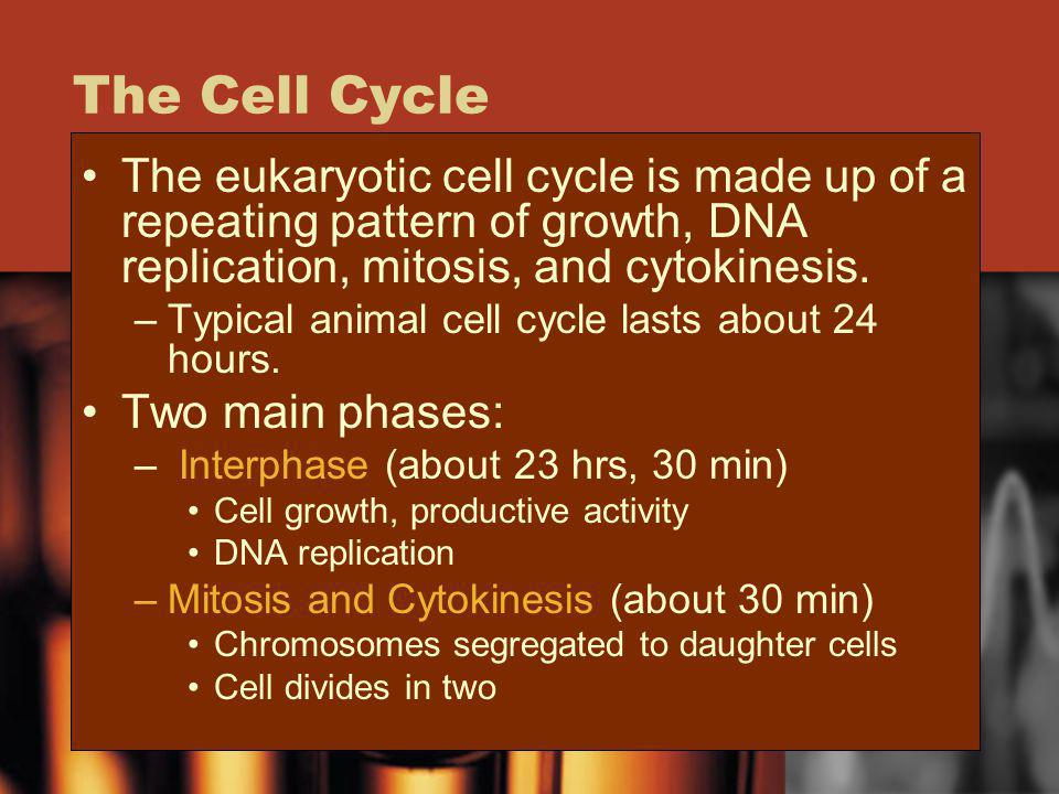 The Cell Cycle The eukaryotic cell cycle is made up of a repeating pattern of growth, DNA replication, mitosis, and cytokinesis.