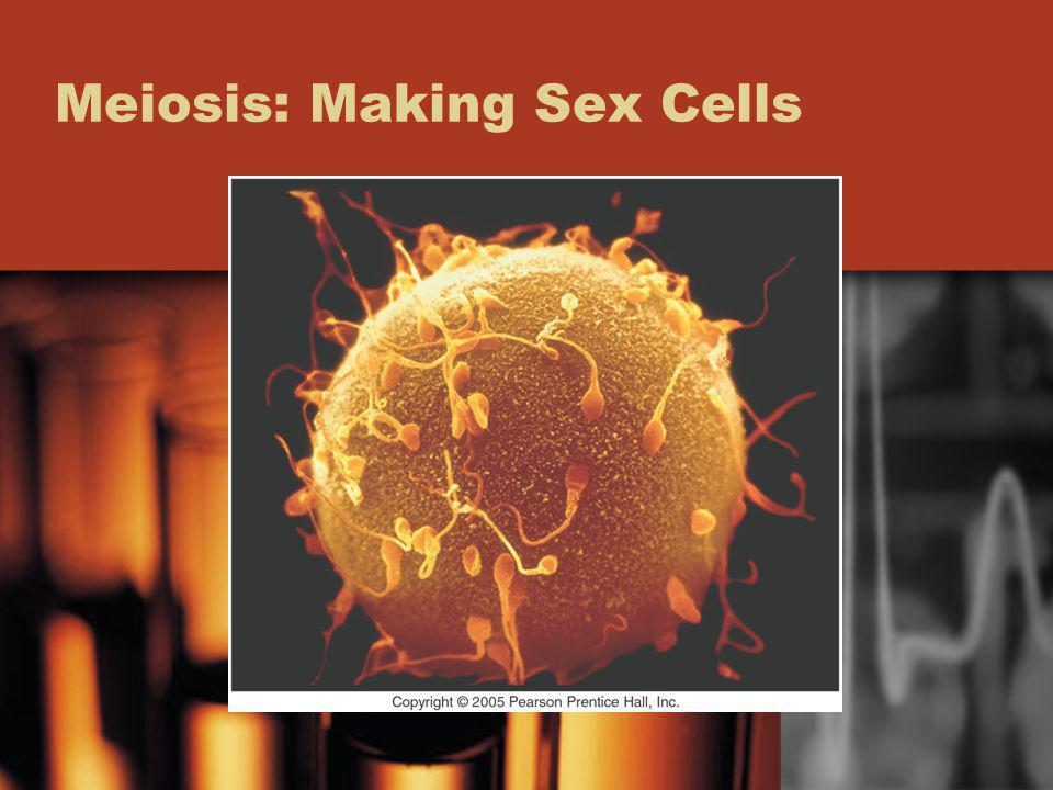 Meiosis: Making Sex Cells
