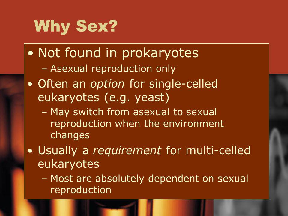 Why Sex Not found in prokaryotes
