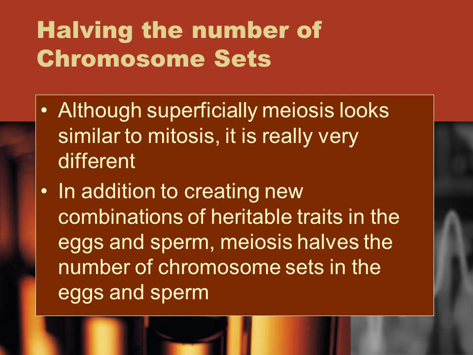 Halving the number of Chromosome Sets