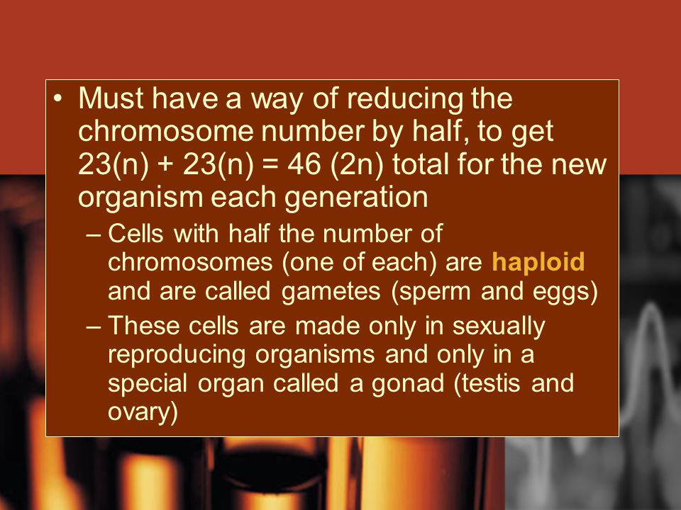 Must have a way of reducing the chromosome number by half, to get 23(n) + 23(n) = 46 (2n) total for the new organism each generation