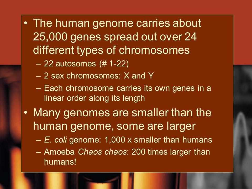 Many genomes are smaller than the human genome, some are larger