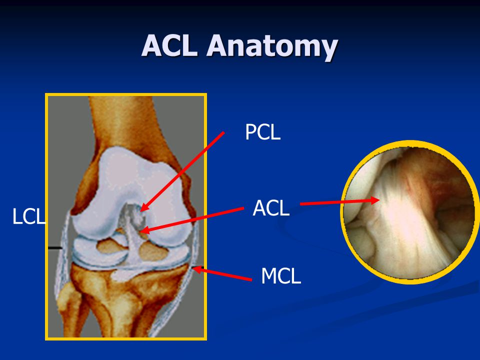 ACL Anatomy PCL ACL LCL MCL