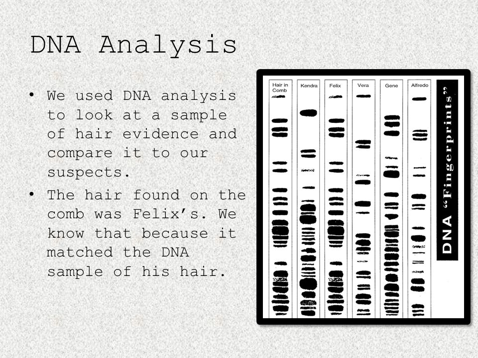 DNA Analysis We used DNA analysis to look at a sample of hair evidence and compare it to our suspects.