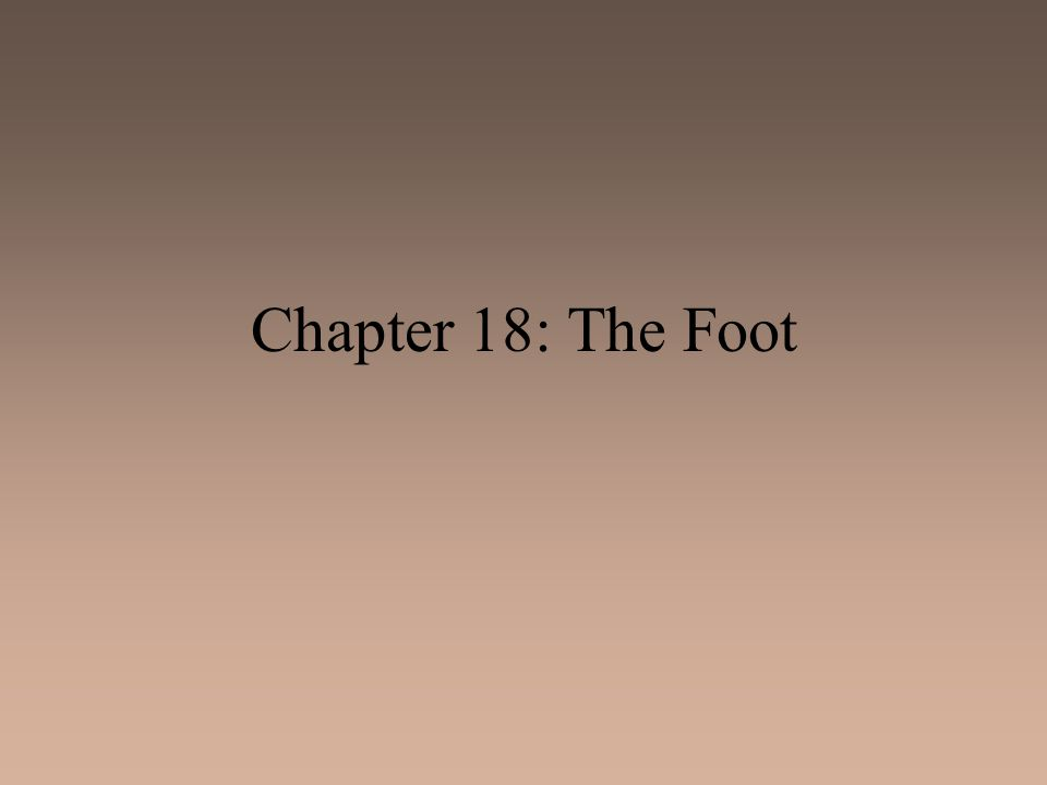 Chapter 18: The Foot