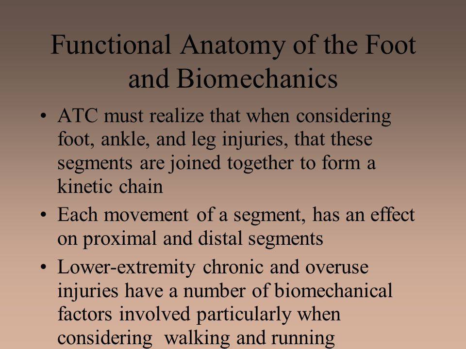 Functional Anatomy of the Foot and Biomechanics