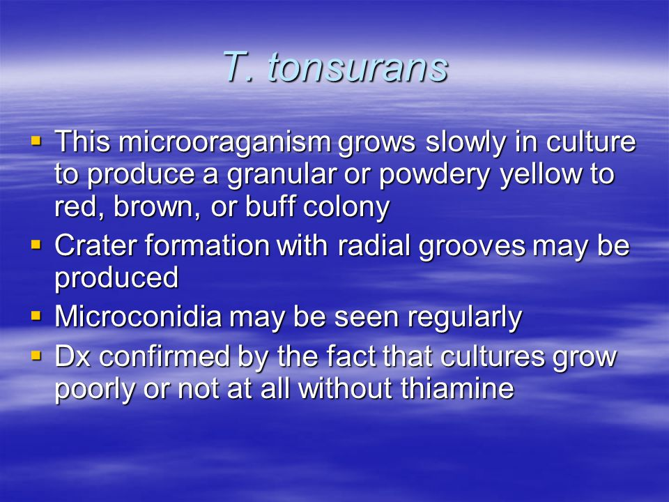 T. tonsurans This microoraganism grows slowly in culture to produce a granular or powdery yellow to red, brown, or buff colony.