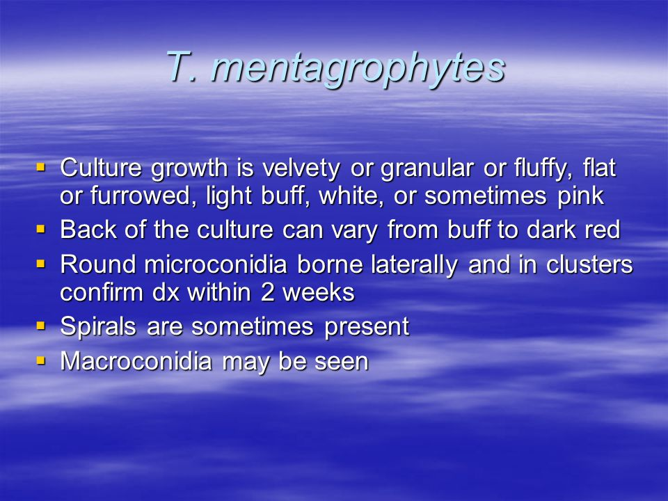 T. mentagrophytes Culture growth is velvety or granular or fluffy, flat or furrowed, light buff, white, or sometimes pink.